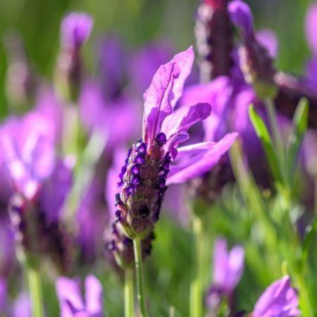 Aromaterapia, esencias florales y productos naturales. Tienda online Espacio Noha-Do